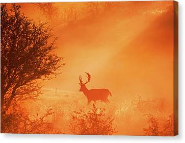 Stag On Stage Canvas Print