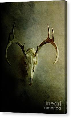 Canvas Print featuring the photograph Stag Skull by Stephanie Frey