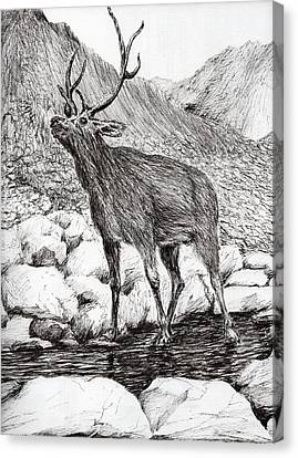 Stag Canvas Print by Vincent Alexander Booth