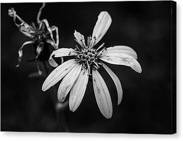 Canvas Print - Stages Of Life by Scott Pellegrin