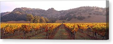 Cellar Canvas Print - Stags Leap Wine Cellars Napa by Panoramic Images