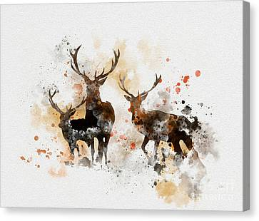 Stags Canvas Print by Rebecca Jenkins