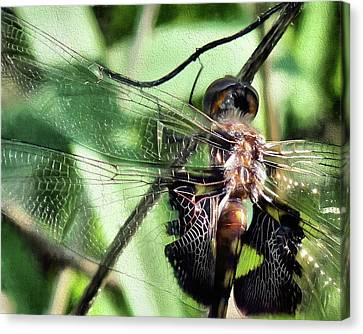 Canvas Print featuring the digital art Stained Glass Dragonfly by JC Findley
