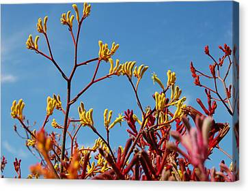 Stalks Of Color Canvas Print by Jean Booth