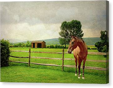 Canvas Print featuring the photograph Stallion At Fence by Diana Angstadt
