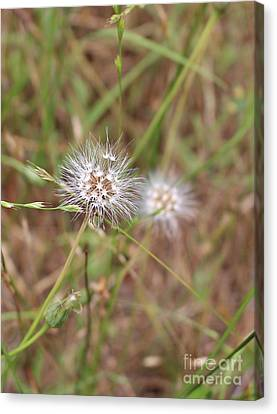 Canvas Print featuring the photograph Stand Back by Marie Neder