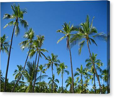 Stand Of Palms Canvas Print