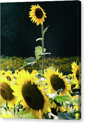 Canvas Print featuring the photograph Stand Out 2 by Andrea Anderegg