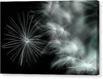 Stand Out And Be Noticed Canvas Print by Michael Eingle