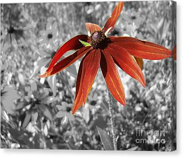 Stand Out  Canvas Print by Cathy  Beharriell