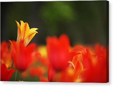 Stand Out In The Crowd Canvas Print by Steve Gravano