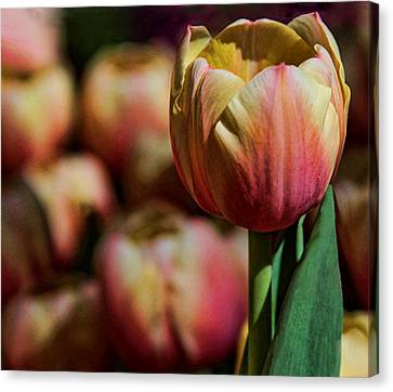 Canvas Print featuring the photograph Stand Out by Tammy Espino