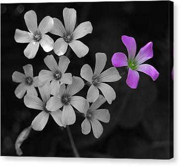 Canvas Print featuring the photograph Stand Up Stand Out by Maggy Marsh