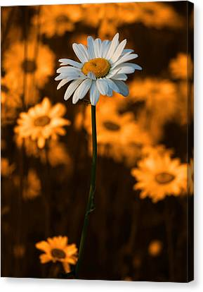 Floral Canvas Print - Standing Alone by Linda McRae