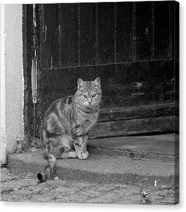 Standing Guard Canvas Print by Mike McGlothlen