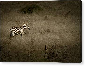 Standing In The Light Canvas Print