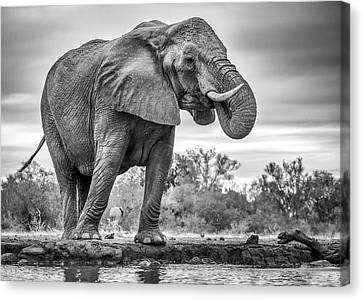 Standing Proud Canvas Print
