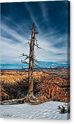 Standing Regardless Canvas Print by Christopher Holmes