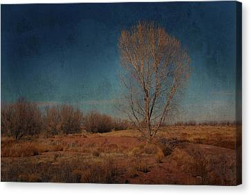 Canvas Print featuring the photograph Standing Solo by Barbara Manis