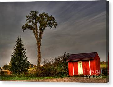 Standing Tall Canvas Print by David Bishop