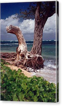 Canvas Print featuring the photograph Standing Tall by Lori Mellen-Pagliaro