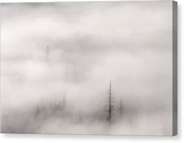 Standing Tall Canvas Print by Mike  Dawson