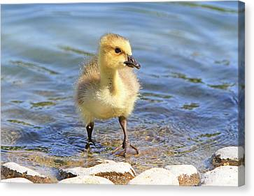 Standing Tall Canvas Print by Shoal Hollingsworth