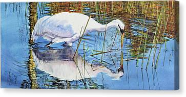 Standing Water Canvas Print by Vicky Lilla