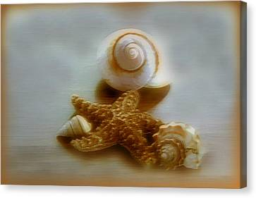 Star And Shells Canvas Print by Linda Sannuti