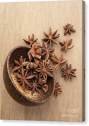 Anise Canvas Print - Star Anise Pods by Edward Fielding