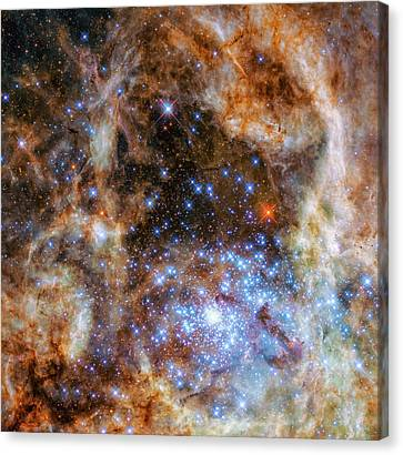 Star Cluster R136 Canvas Print