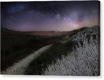 Star Flowers Canvas Print by Bill Wakeley