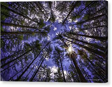 Star Light Canvas Print