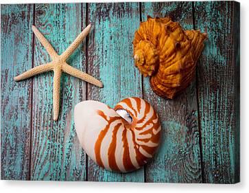 Seashell Fine Art Canvas Print - Star Shell Still Life by Garry Gay