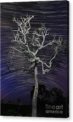 Star Trails In The Cerrado Canvas Print