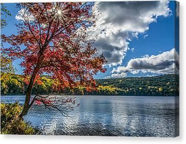 Starburst Tree @ Silvermine Lake Canvas Print