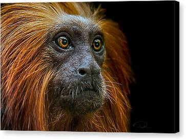 Primate Canvas Print - Stare Down by Paul Neville