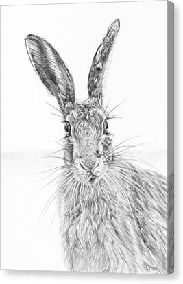 Stare Of The Hare Canvas Print by Frances Vincent