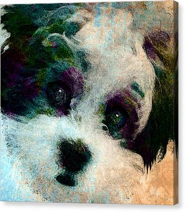 Stare Canvas Print by Stacey Chiew