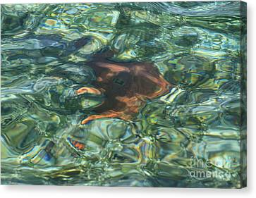 Canvas Print featuring the photograph Starfish Abstract by Edward R Wisell