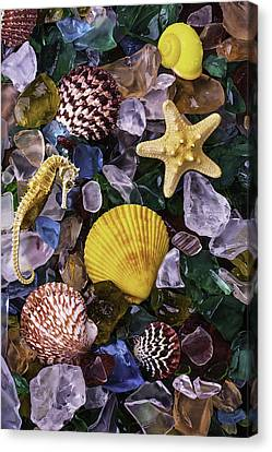 Starfish And Sea Horse Canvas Print by Garry Gay