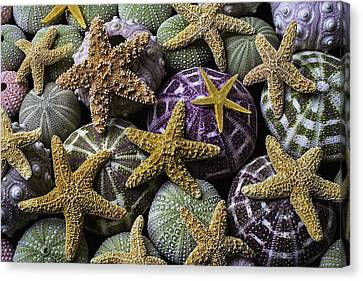 Starfish And Sea Urchins Canvas Print by Garry Gay