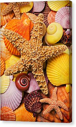 Assorted Canvas Print - Starfish And Seashells  by Garry Gay
