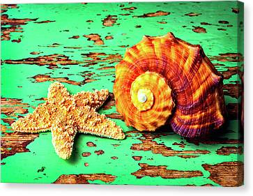 Starfish And Snail Shell Canvas Print by Garry Gay