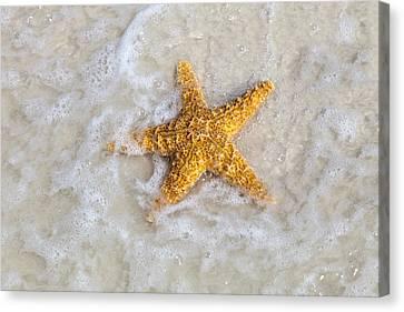 Starfish Canvas Print by Janet Fikar