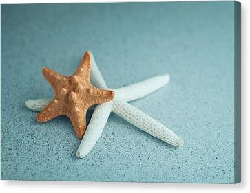 Starfish On Aqua Canvas Print by Tom Mc Nemar