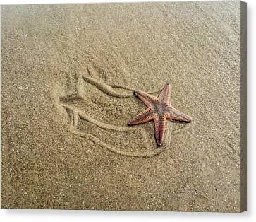 Starfish On The Beach Canvas Print by Debra Martz