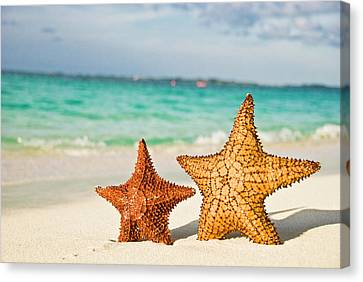 Starfish On Tropical Caribbean Beach Canvas Print by Mehmed Zelkovic