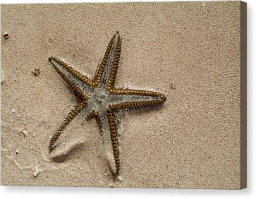 Starfish Partially Buried In White Sand Canvas Print by Sami Sarkis