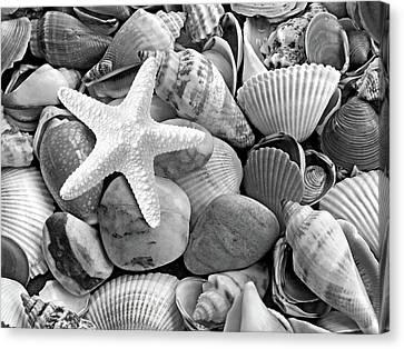 Starfish With Shells And Pebbles Mono Canvas Print